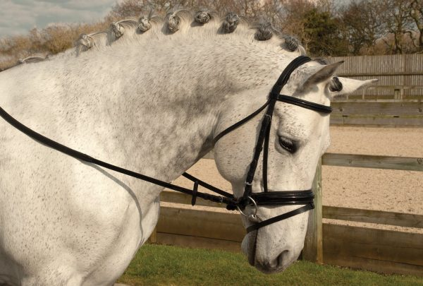 rhinegold, comfort bridle, patent leather,