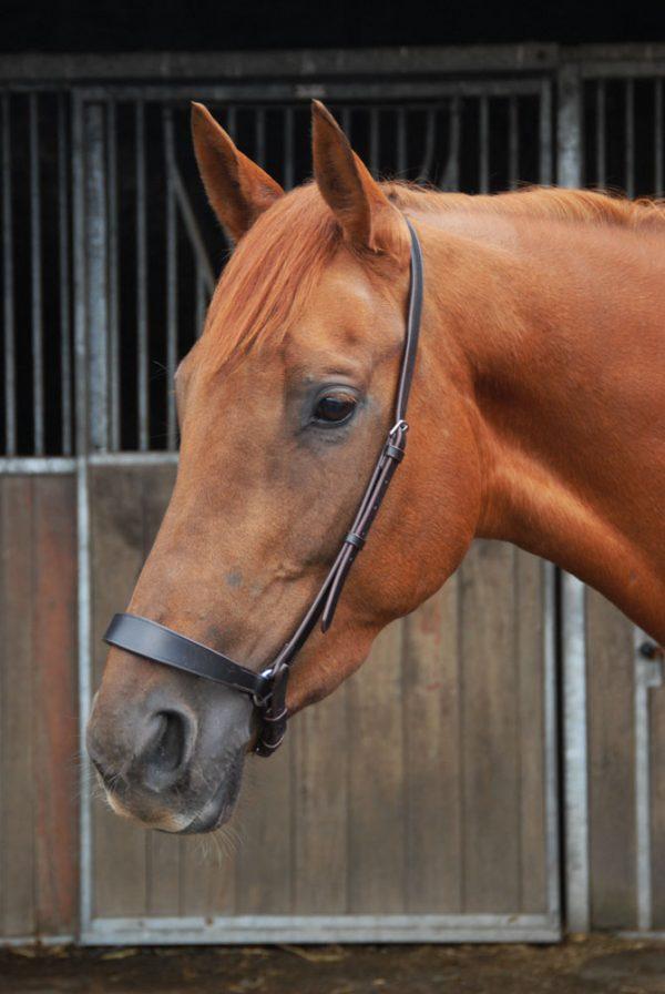 Chukka Polo Drop Noseband, Chukka Polo Drop Noseband, polo noseband, equestrian, polo ponies, drop noseband, leather, leatherwork, full grain leather, horse tack, noseband,