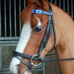 chukka browband, polo ponies, leather tack, equestrian colour, horse tack, real leather, polo equipment,