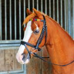 chukka browband, colourful browbands, horse tack, polo tack, polo leather, equestrian, polo ponies,