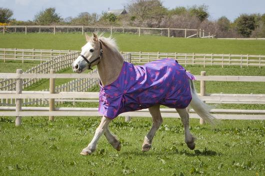 lightweight, turnout, pink stars, outdoor rug